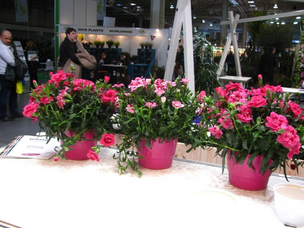 Gardenia 7